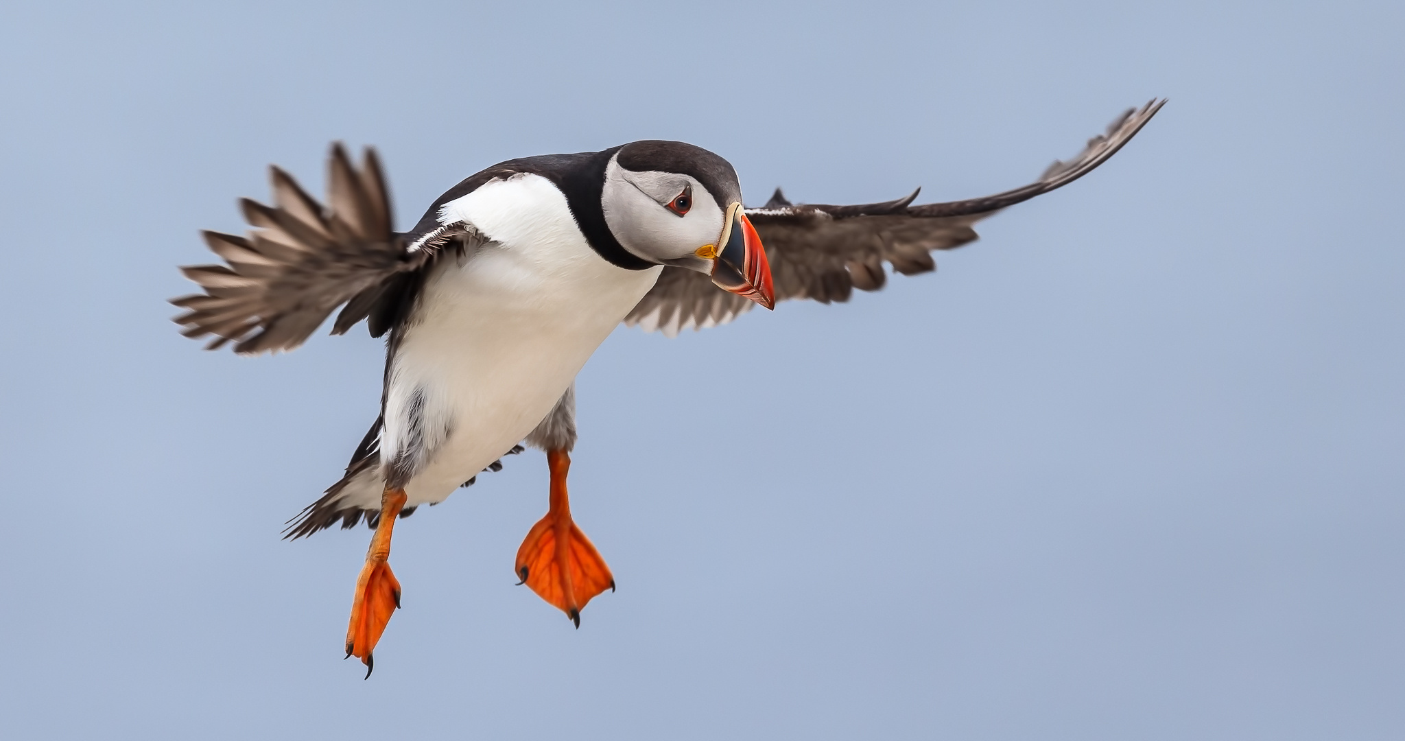 Atlantic, Puffin, Farne, Islands, Seahouses, Northumberland, Sup